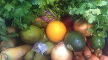 Berkshire Organics 3-21