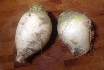 Gilfeather turnips