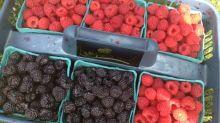 berry cobbler