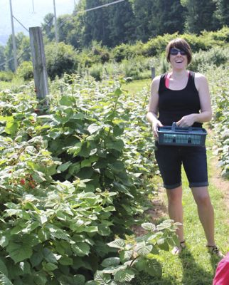 picking berries at the orchard